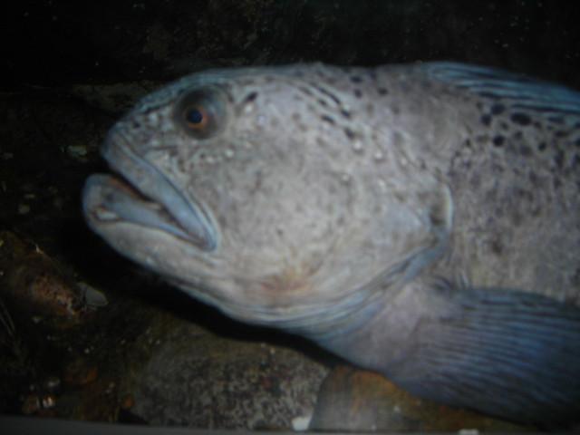 Ugly Aquarium Fish