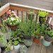 The backporch garden