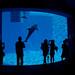 20080724 Aquarium 05 (あっち側とこっち側)