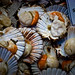 Scallops at Cardiff Market