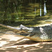 Small photo of The Gharial
