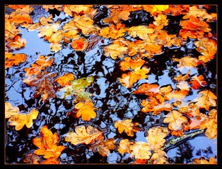 Oak leaf puddle