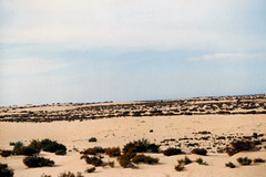 Ey_01 Sinai Desert