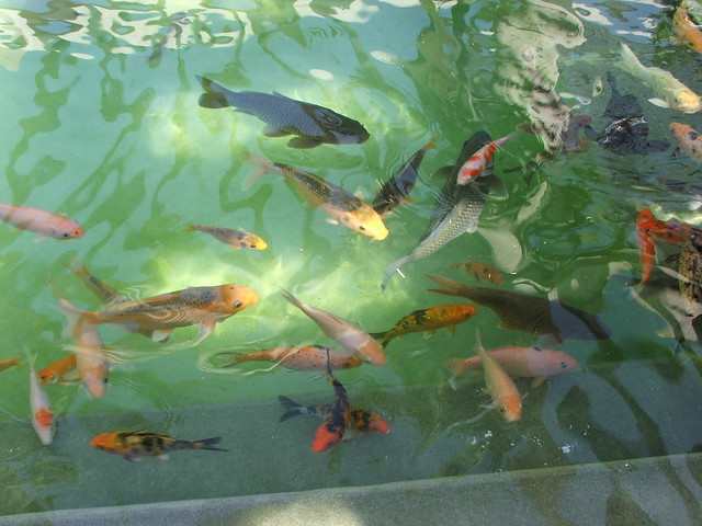 fish pool microsoft india mobile developer team outing
