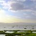 Keibul Lamjao National Park image