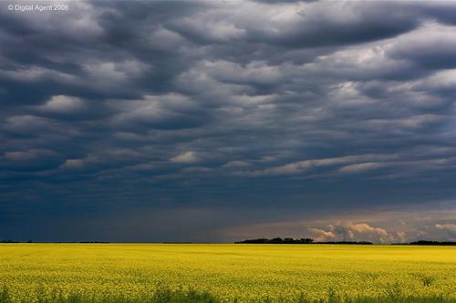 storm rain yellow clouds manitoba canolaoil canolafields abigfave anawesomeshot colorphotoaward prairiefields landscapesdreams multimegashot digitalagent