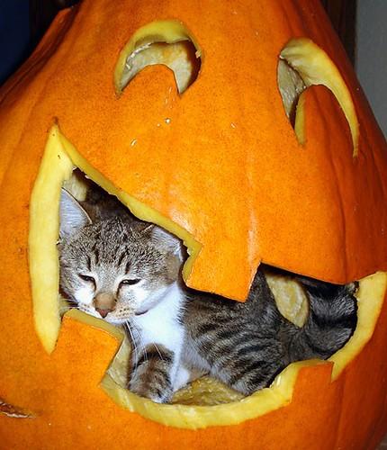 Orange - Pumpkin - Kitten | Flickr - Photo Sharing!