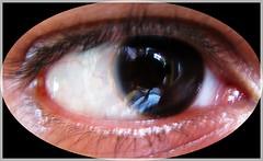 iris, eyelash, eyelash extensions, close-up, eye, organ,