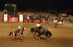 cattle-like mammal(0.0), bull(0.0), barrel racing(0.0), bull riding(0.0), animal sports(1.0), western riding(1.0), event(1.0), equestrian sport(1.0), tradition(1.0), sports(1.0), charreada(1.0), performance(1.0), traditional sport(1.0),