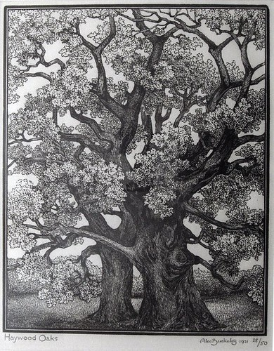 Wood engraving by Alec Buckels of 'Haywood oaks' 1931