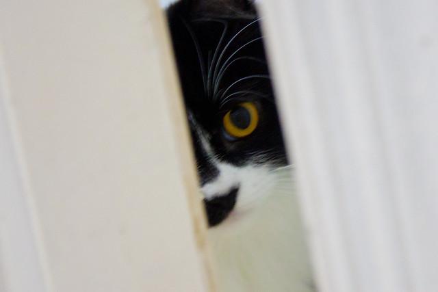 Lola's eyes