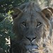 Central Kalahari Game Reserve #1