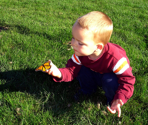 3 yr old with Monarch