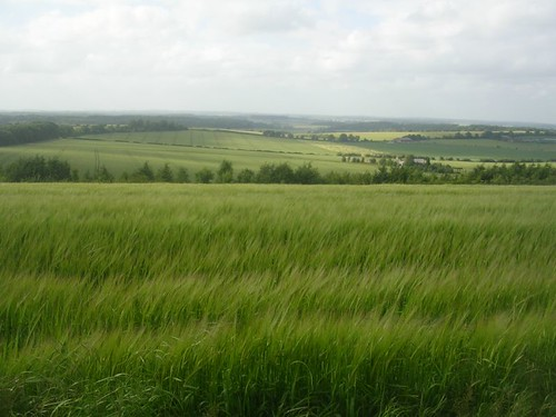 View over barley