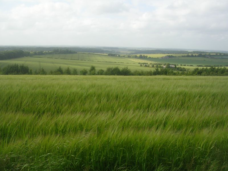 View over barley Kintbury to Great Bedwyn