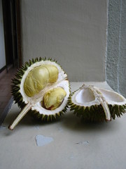 coconut(0.0), flower(0.0), plant(0.0), produce(0.0), fruit(0.0), food(0.0), durian(1.0),