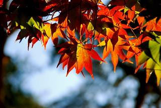 Shadowgraph of autumn