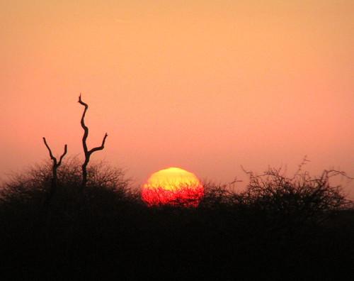 africa morning sunrise southafrica dawn african south safari afrika nationalparks za südafrika krugernationalpark kruger limpopo satara southafrican knp sudafrica 非洲 afriquedusud lafrique zuidafrika limpopoprovince sandraleidholdt sudafrika suráfrica afrikasafari leidholdt