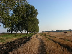 Fields in Russia