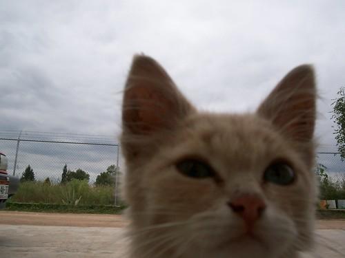 Ponderous Cat...is Ponderous