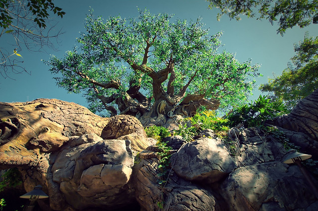 Angle Finder App >> Disney - Disney's Animal Kingdom - Tree of Life | Flickr - Photo Sharing!