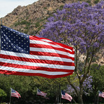 Old Glory and Jacaranda