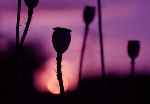 sunset silhouette canon purple explore abigfave magicofaworldinmacro theperfectphotographer