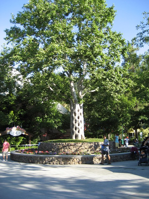 Gilroy gardens flickr photo sharing for Gilroy garden trees