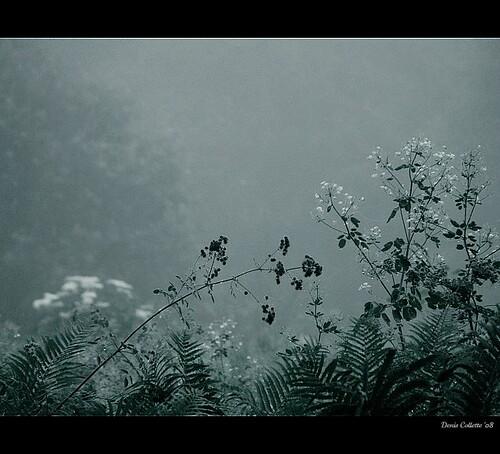 The gentle pleasures of life in my wild marshland...!!! / La douceur de vivre dans mon marais sauvage...!!!