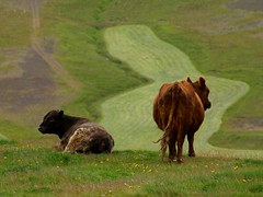 Sveit - Farms
