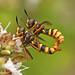 Pair of flies by nutmeg66