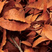 Small photo of Brown leaves