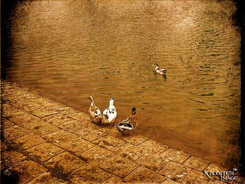 world pakistan copyright lake art texture love water still nikon asia alone shot heart © d70s captured creative ducks explore karachi 2008 atif explored mywinners abigfave abigfav nikoncorporation picturefantastic goldstaraward xploiter