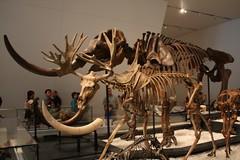 sculpture(0.0), mammoth(0.0), dinosaur(0.0), tourist attraction(1.0), art(1.0), museum(1.0),