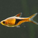 Minnows and Carps - Photo (c) LiChieh Pan, some rights reserved (CC BY-NC-SA)