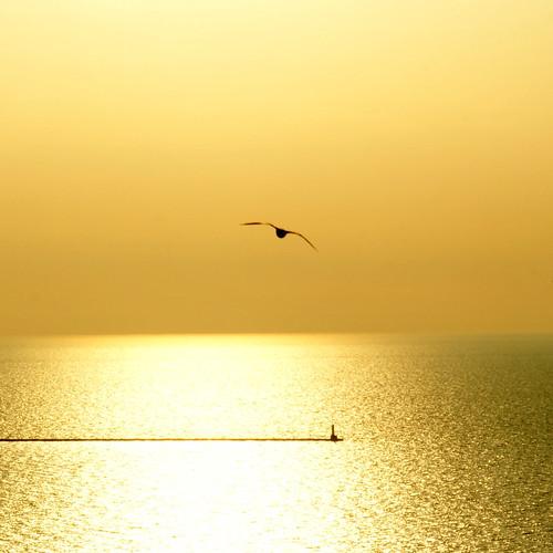 morning lake chicago bird water yellow sunrise gold hotel early illinois lakemichigan sony350 paololivornosfriends