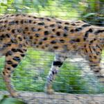 Los Angeles Zoo 058
