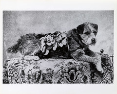 Owney by Smithsonian Institution
