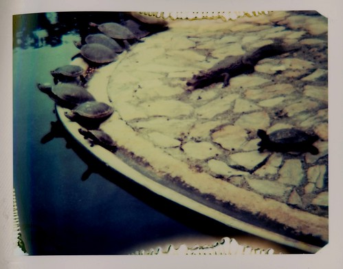 Crocodile among turtles, a Polaroid version, Parque del Este, Caracas, Venezuela, June 2008.