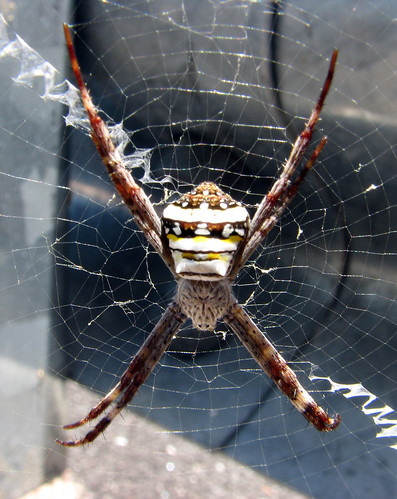 St Andrews Cross Spider & Cook Highway - 1 of 4