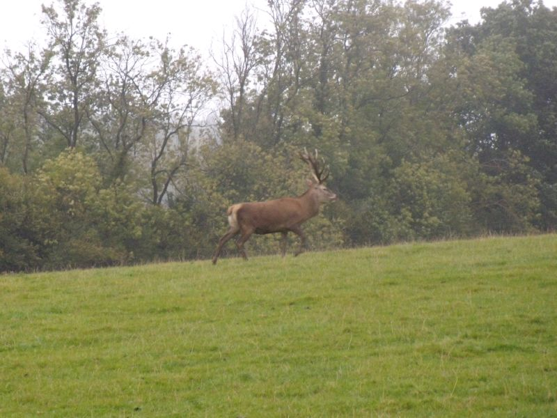 Stag Deer farm near Wakehurst Place Balcombe Circular via Ardingley Reservoir (summer walk)