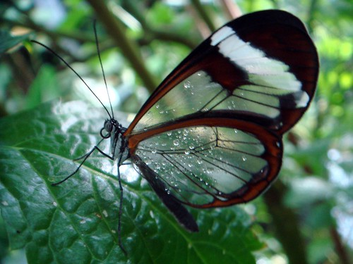 Butterfly+drops = unique ! Enjoy it and have a fabulous day!...(^!~)...:)