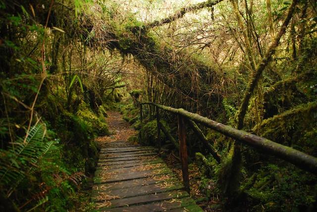 Patagonian jungle