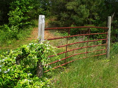 shrub, flower, fence, split rail fence,