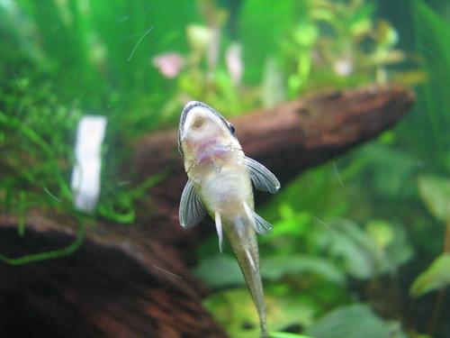 My 20g planted freshwater saltwater aquarium forum for White algae in fish tank