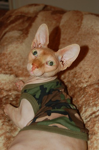 my cute cat joined the army....