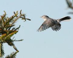 Life List of  Bird Photos