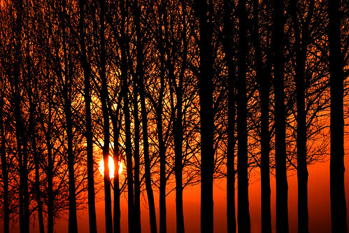 trees winter red sky orange netherlands colors yellow sunrise landscape dutchlandscape heteren orginalnocrop typicaldutchlinedtrees gettyimagesbeneluxq2