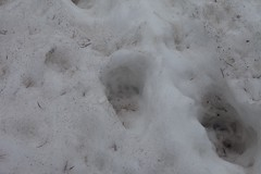 footprint, winter, white, snow, ice, freezing,