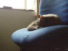Misty on Chair